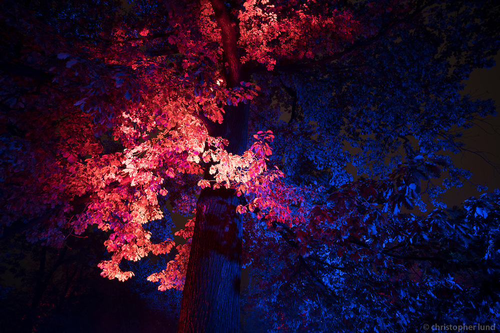 Kari Kola's Magical Garden. This light installation on the Střelecký Ostrov island in Prague is based on dynamic lighting, strong colours and a meditative tempo.