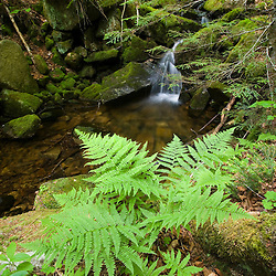 A stream cascades through the forest on Mondanock Mountain in Lemington, Vermont.  The Northeast Kingdom.