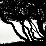 Limited edition Variations in Trees series 1#30