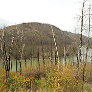 Burned forest after a wild fire. Barriere, British Columbia, Canada, in the Okanagan - Caribou region.