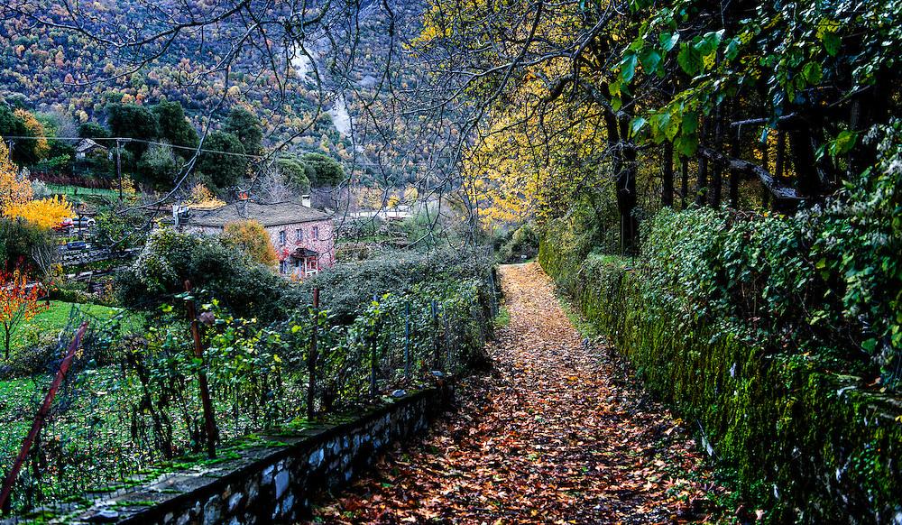 Autumn in Papingo