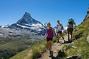 The Matterhorn (4478 m/14,692 ft) rises above Zmutt Valley. From Zermatt, hike the scenic Höhbalmen Höhenweg loop via Bergrestaurant Edelweiss, Trift Hut and Zmutt, in the Pennine Alps, Switzerland, Europe. With delightful views of alpine meadows, peaks and glaciers, this strenuous walk went up and down 1200 meters over 21.6 km (13.4 miles). For licensing options, please inquire.