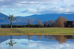 Reflections in a dam near Powranna