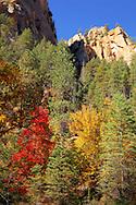 The stunning colors of Fall - Oak Creek Canyon, AZ