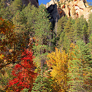 The stunning colors of Fall - Oak Creek Canyon, AZ