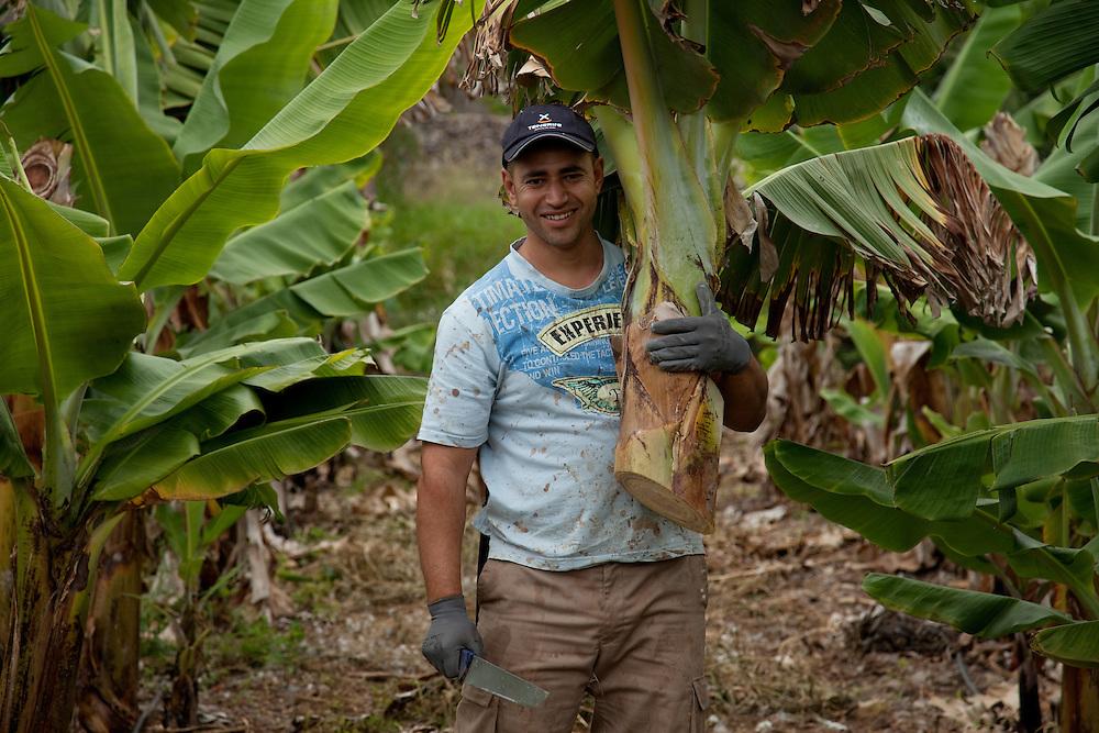 Banana Plantation Fañabé, South Tenerife.