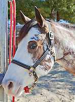 Close-up of horse looking at camera