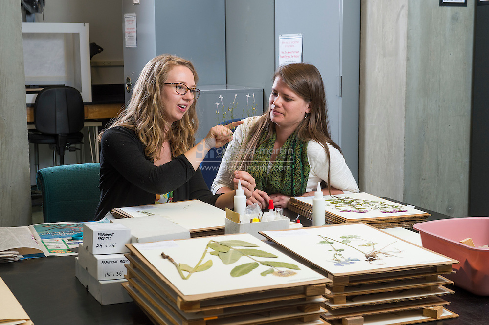 research herbarium artist in residence