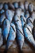 Sardines from Negro River, at the fresh market, at São Gabriel da Cachoeira, Amazonas.