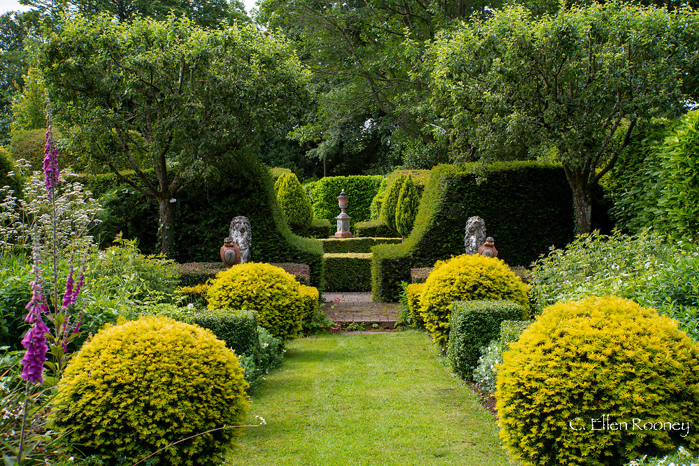 Double herbaceous borders and Taxus baccata in the Hilliard Garden in the Laskett Gardens, Much Birch, Herefordshire, UK