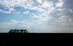 04 June 2015. Jean Lafitte National Historic Park, Louisiana.<br /> Looking out over the grasslands in the swamp at the Barataria Preserve wetlands south or New Orleans. <br /> Photo©; Charlie Varley/varleypix.com