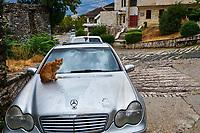Albanie, Albania, Gjirokaster, patrimoine mondial de l'Unesco, chat des rues // Albania, Gjirokaster province, Gjirokastra (Gjirokaster), UNESCO World Heritage Site, Old city, cats street