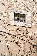 small window with bars and vines