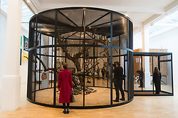 © Licensed to London News Pictures. 13/02/2018. London, UK. installation titled The Library for the Birds of London, 2018 by American artist MARK DION featuring live birds. The artwork is part of his first retrospective 'Mark Dion: Theatre of the Natural World showing at the Whitechapel Gallery. Photo credit: Ray Tang/LNP