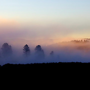 Morning fog makes for an ethereal sunrise in the Hayden Valley area of Yellowstone National Park, WY.