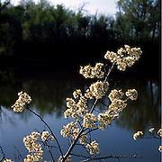 Marjorie Perry Nature Preserve, Greenwood Village, Colorado, Spring