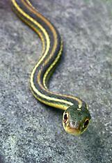 Snakes, Lizards & Amphibians