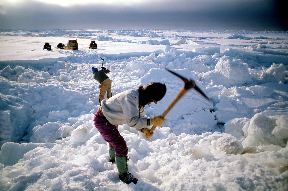 Barrow, Alaska, the shifting sea ice creates a rugged terrain. Whalers and other members of the Barrow community must first prepare a path in order to set up a fish camp on the edge of the ice pack near open water.