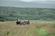 A group of visitors escorted by Sanctuary Manager Tom Griffin return to camp after a day of close-up brown bear viewing at the McNeil River State Game Sanctuary on the Kenai Peninsula, Alaska. The remote site is accessed only with a special permit and is the world's largest seasonal population of brown bears in their natural environment.
