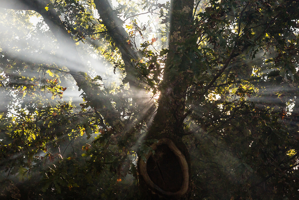 Sun rays shine through the smoke in a park, near Aldeia das Dez, Portugal.