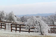 Greenville, NY - Trees and a fence are covered in ice after an ice storm on Dec. 14, 2008.