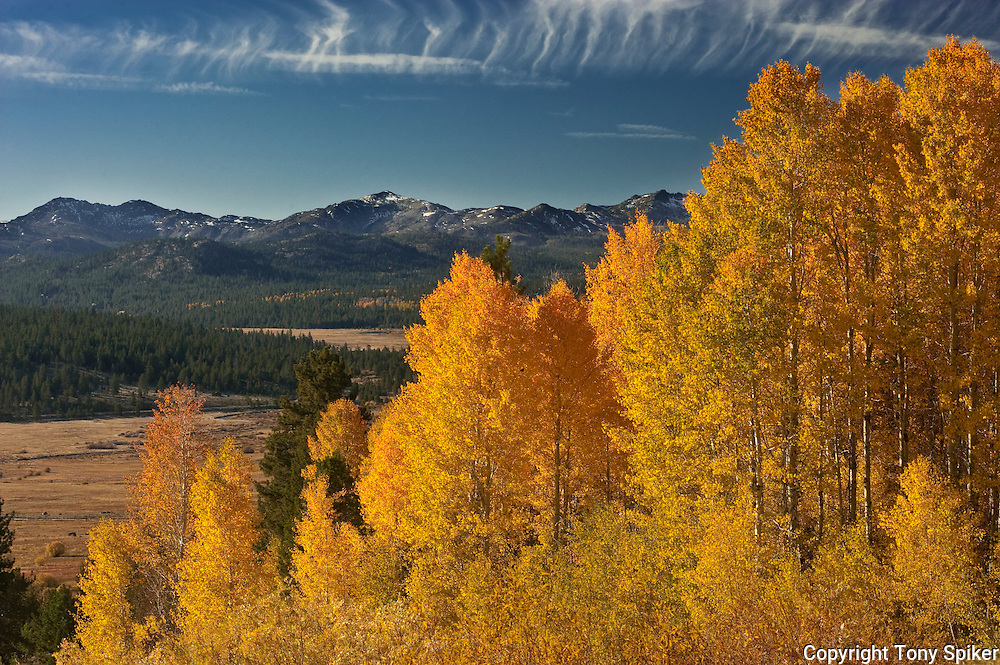 """Hope Valley Fall Colors 1"" - Aspen Tress at the peak of the fall season overlooking Hope Valley"