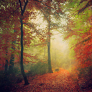 Colourful path through a foggy autumn forest. Texturized photograph<br />