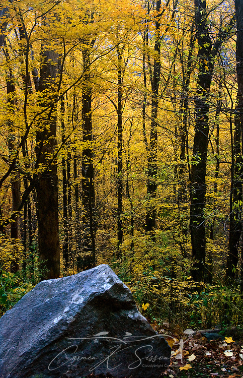 Leaves change color on the Little River Road trail in the Great Smoky Mountains. (Photo by Carmen K. Sisson/Cloudybright)