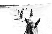 Riding horseback from Giza to Saqqara across the desert.  Bent pyramid of Dashur visible in the distance, as is a strip of plantation on the left.  Six or seven figures on horseback visible in a ragged line.  Head of the photographer's horse in the foreground, ears askew.  Pen and ink wash effect applied to Tri-X negative.