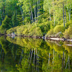 Paper birch trees reflect in Kettle Pond in Vermont's Groton State Forest.