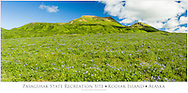 Composite panorama of Wild Geraniums (Geranium erianthum) and other wildflowers in the lush meadows and mountains of Pasagshak State Recreation Site on Kodiak Island in Southwestern Alaska. Summer. Morning.