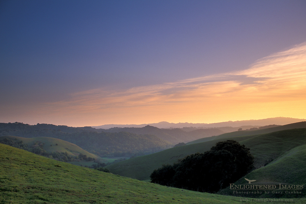 Oak trees and green grass on hills over valley in spring at sunset, Briones Regional Park, Contra Costa County, California