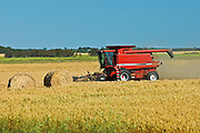 harvesting wheat<br /> Fairlight<br /> Saskatchewan<br /> Canada