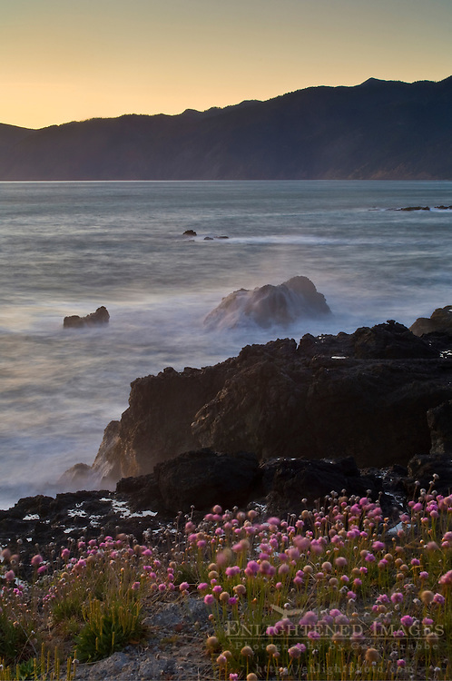 Wildflowers on coastal bluffs and ocean waves crashing on rock at sunset, Shelter Cove, Lost Coast, Humboldt County, California
