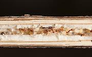 Acorn Ants; Themnothorax curvispinosus;  in goldenrod stalk; PA, Philadelphia
