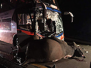 runaway ELEPHANT is crushed to death after being hit by a double decker bus<br /> <br /> This is the horrific moment a bus carrying 25 people on a motorway crashed into a runaway elephant.<br /> The double-decker coach had been travelling from Bangkok to Chiang Mai in northern Thailand when it ploughed into the eight-year-old bull which had strayed onto the road.<br /> Mobile phone footage captured the moment the dazed elephant was struck by the bus - which was travelling at around 60mph and skidded for some 30 metres with the elephant under the front wheels.<br /> Heartbreaking pictures show the male elephant crushed to death with the entire front windscreen of the coach shattered from the impact.<br /> The elephant died instantly and rescuers had to remove a foot from the dashboard while they treated critically injured driver Narit Chittong, 45, who was trapped in the wreckage.<br /> ©Exclusivepix Media