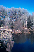 San Pedro River in winter, cottonwood trees behind, Sierra Vista, Arizona.©1989 Edward McCain. All rights reserved. McCain Photography, McCain Creative, Inc.