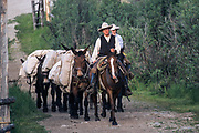 Cowboy's horseback with pack mules headed down trail in Buffalo, Wyoming. Model release available.