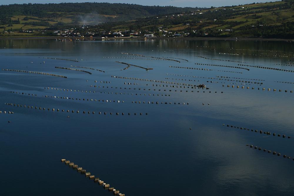Mussels being farmed off of Chiloe Island, Chile, Feb. 11, 2004. Daniel Beltra/Greenpeace.