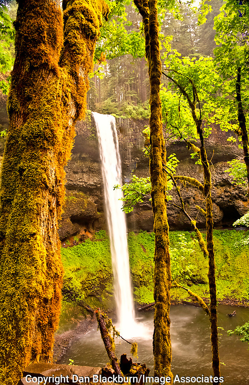 Silver Falls in Full Flow in Oregon