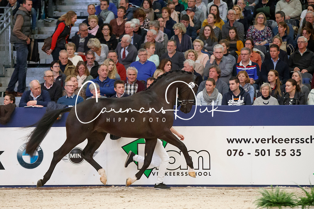 340, King Size From Second Life Z<br /> KWPN Stallionshow - 's Hertogenbosch 2018<br /> © Hippo Foto - Dirk Caremans<br /> 02/02/2018