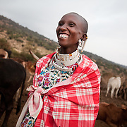 The Stars Foundation visiting S.A.F.E in the Loita Hills near the Tanzanian border in Kenya...It is mainly Maasais who live in the Loita Hills up above the Serengeti plains. They live in small villages and communities called bomas and live mainly of raising and selling live stock such as cattle and goats. Its a very remote region in Kenya, hard to get to without a four wheel drive with very little infrastructure and up till 2010 no mobile phone network. The Maasais are well known though out Kenya and the world for their colorful clothing and their way of keeping their old traditions alive...A young woman from Dixon's homestead is out milking the cows early morning. Dixon is a member of the S.A.F.E theatre group. S.A.F.E is a charity which educates children and young people about life skills and how to protect themselves from HIV and other STIs through performance. They also do performances about Female Genital Mutilation, an old tradition amongst the Maasais in Loita and a very brutal and controversial custom which S.A.F.E is trying to eradicate.
