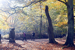 © Licensed to London News Pictures. 13/11/2013. Burnham, UK. People walk through the woodland.  Autumn sunshine through the trees at Burnham Beeches, South Buckinghamshire on WEDNESDAY 13TH NOVEMBER. The beeches covering 220 hectares is primarily noted for its ancient beech and oak pollards. Photo credit : Stephen Simpson/LNP