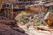Kachina Bridge hikers, in Natural Bridges National Monument, near Blanding, Utah, USA. White Canyon Creek has cut Kachina Bridge with a span of 192 feet through white Permian sandstone of the Cedar Mesa Formation. Kachina is named for rock art on the bridge that resembles symbols commonly used on kachina dolls. Manganese-rich desert varnish requires thousands of years to coat a rock face protected from precipitation and wind erosion. The varnish likely originates from airborne dust and external surface runoff, including: clay minerals, oxides and hydroxides of manganese (Mn) and/or iron (Fe), sand grains, trace elements, and usually organic matter. Streaks of black varnish often occur where water cascades over cliffs protected from wind. Varnish color varies from shades of brown to black. Manganese-poor, iron-rich varnishes are red to orange, and intermediate concentrations are shaded brown. Manganese-oxidizing microbes may explain the unusually high concentration of manganese in black desert varnish, which can be smooth and shiny where densest.