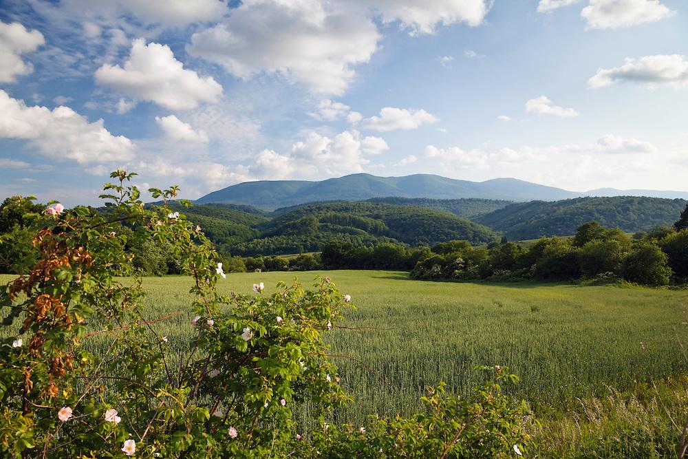 Eastern Slovakian landscape with grainfield near Kalna Roztoka, Western Carpathians, Eastern Slovakia, europe