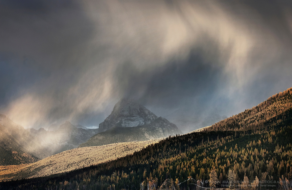 Curtains of rain showers glow in the evening light above forests in autumn colors, Glacier National Park Montana USA