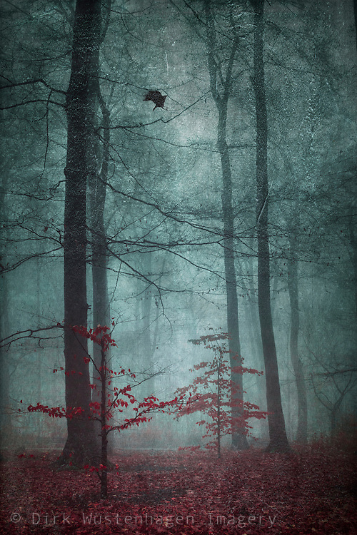 Two small trees with red leaves in a misty late autumn forest . tetured photograph.<br />