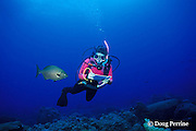 researcher counts fish species on reef for fish census, Flower Garden Banks National Marine Sanctuary, off the coast of Texas, USA ( Gulf of Mexico )