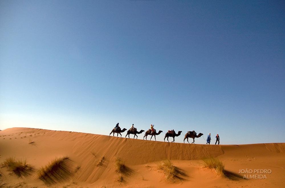 A camel caravan moving at the sand dunes of the Sahara Desert