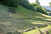 family of farmers work in a field . Prutz, Tyrol, Austria